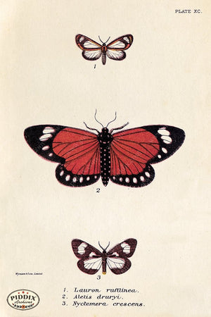 PDXC5298 -- Butterflies Color Illustration