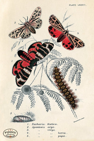 PDXC5302 -- Butterflies Color Illustration
