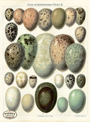 PDXC5769 -- Bird Eggs Color Illustration