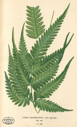 Pdxc5791 -- Plants & Leaves Color Illustration