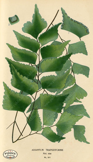Pdxc5794 -- Plants & Leaves Color Illustration