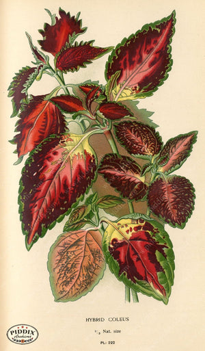 Pdxc5795 -- Plants & Leaves Color Illustration