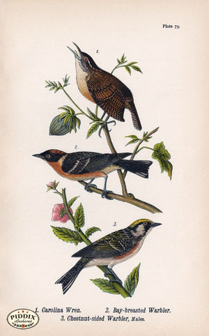 Pdxc5937 -- Birds Color Illustration