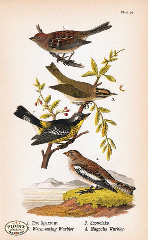 Pdxc5938 -- Birds Color Illustration