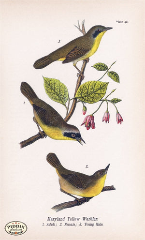 Pdxc5941 -- Birds Color Illustration
