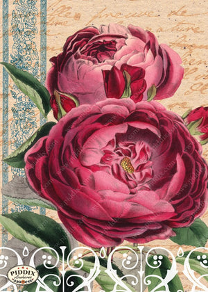 Pdxc5949B -- Original Flower Collages Collage