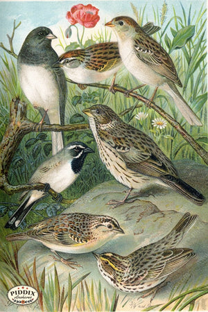 Pdxc5986 -- Birds Color Illustration