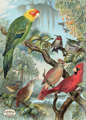 Pdxc5989 -- Birds Color Illustration