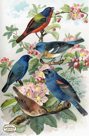 Pdxc5990 -- Birds Color Illustration