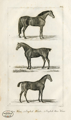 Pdxc8674 -- Horse Engravings Black & White Engraving