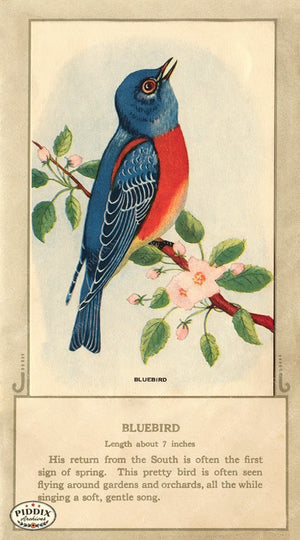PDXC9664 -- Birds Color Illustration