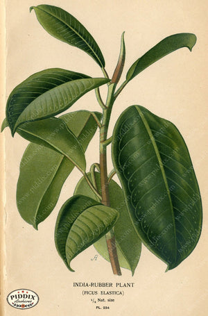Plants & Leaves Pdxc4079A Color Illustration