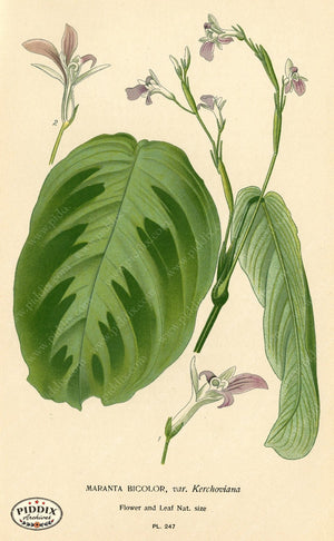 Plants & Leaves Pdxc4094 Color Illustration