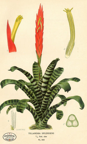 Plants & Leaves Pdxc4098 Color Illustration