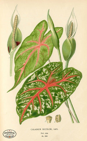Plants & Leaves Pdxc4136A Color Illustration