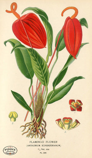 Plants & Leaves Pdxc4139 Color Illustration