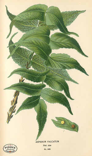 Plants & Leaves Pdxc4148 Color Illustration