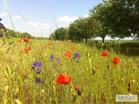 poppies and wild flowers growing in tall grass