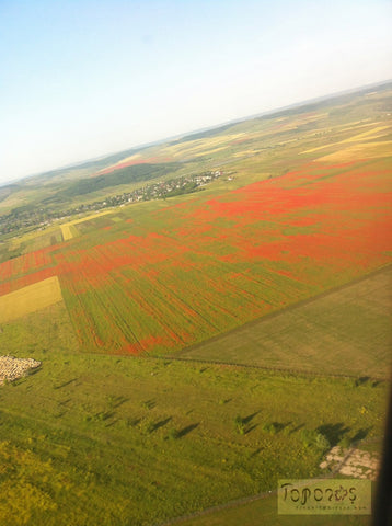 aerial view of red poppies in a green wheat field near Chisinau, Moldova