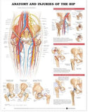 Anatomy and Injuries of the Hip Chart