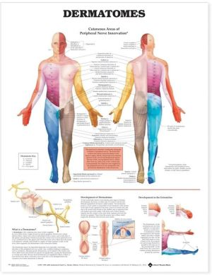 Dermatomes Chart - ABC Books