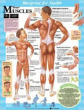 Blueprint for Health Your Muscles Chart Chart - ABC Books