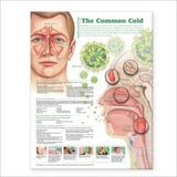 Understanding the Common Cold Chart 2E - ABC Books