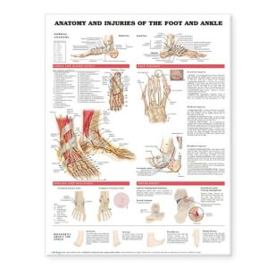 Anatomy and Injuries of the Foot and Ankle Chart - ABC Books