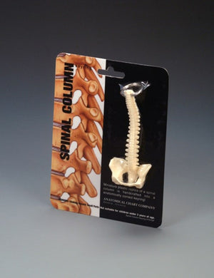 Spine Key Ring - ABC Books