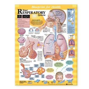 Blueprint for Health Your Respiratory System Chart - ABC Books