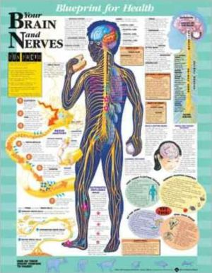 Blueprint for Health Your Brain and Nerves Chart - ABC Books