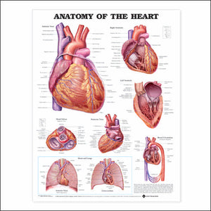 Anatomy of the Heart 3E LAMINATED - ABC Books