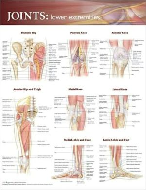 Joints of the Lower Extremities Chart - ABC Books