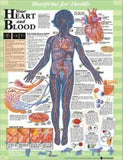 Blueprint for Health Your Heart and Blood Chart - ABC Books