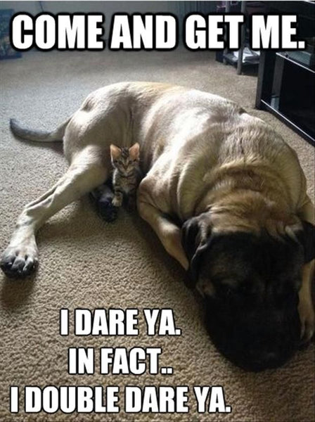 dog protecting kitten