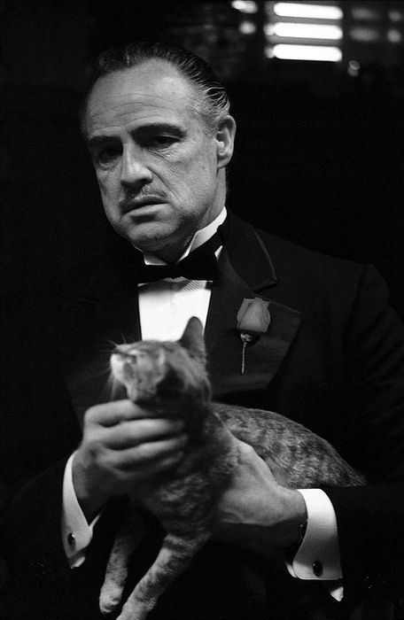 Godfather an offer you can't refuse