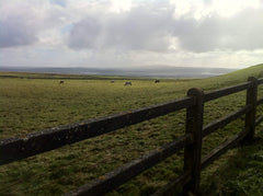Ireland - fence and pasture