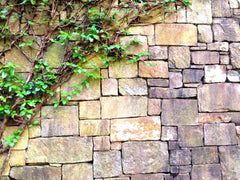 Vines on rock wall