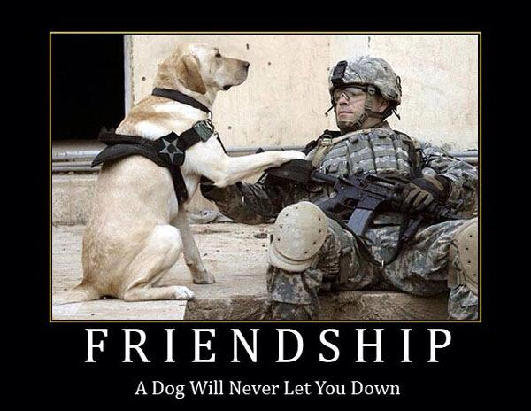 Friendship A dog will never let you down.