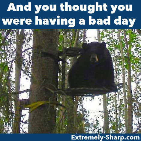 Hunting Humor bear in deer stand