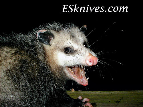 Possum Hunting ESKnives