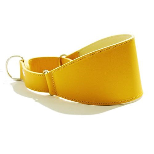 Collar Galgo Martingale Amarillo