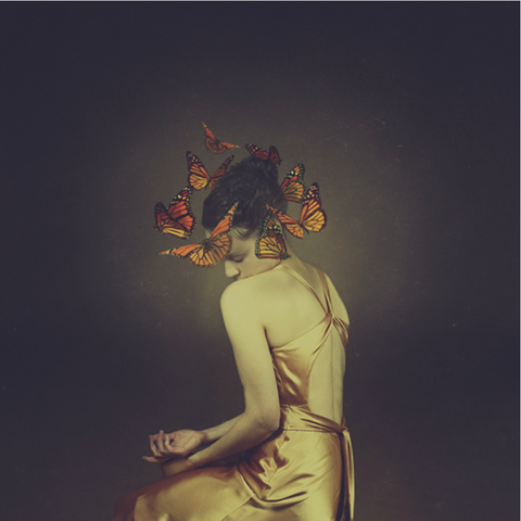 From The Same Cocoon  - Josephine Cardin