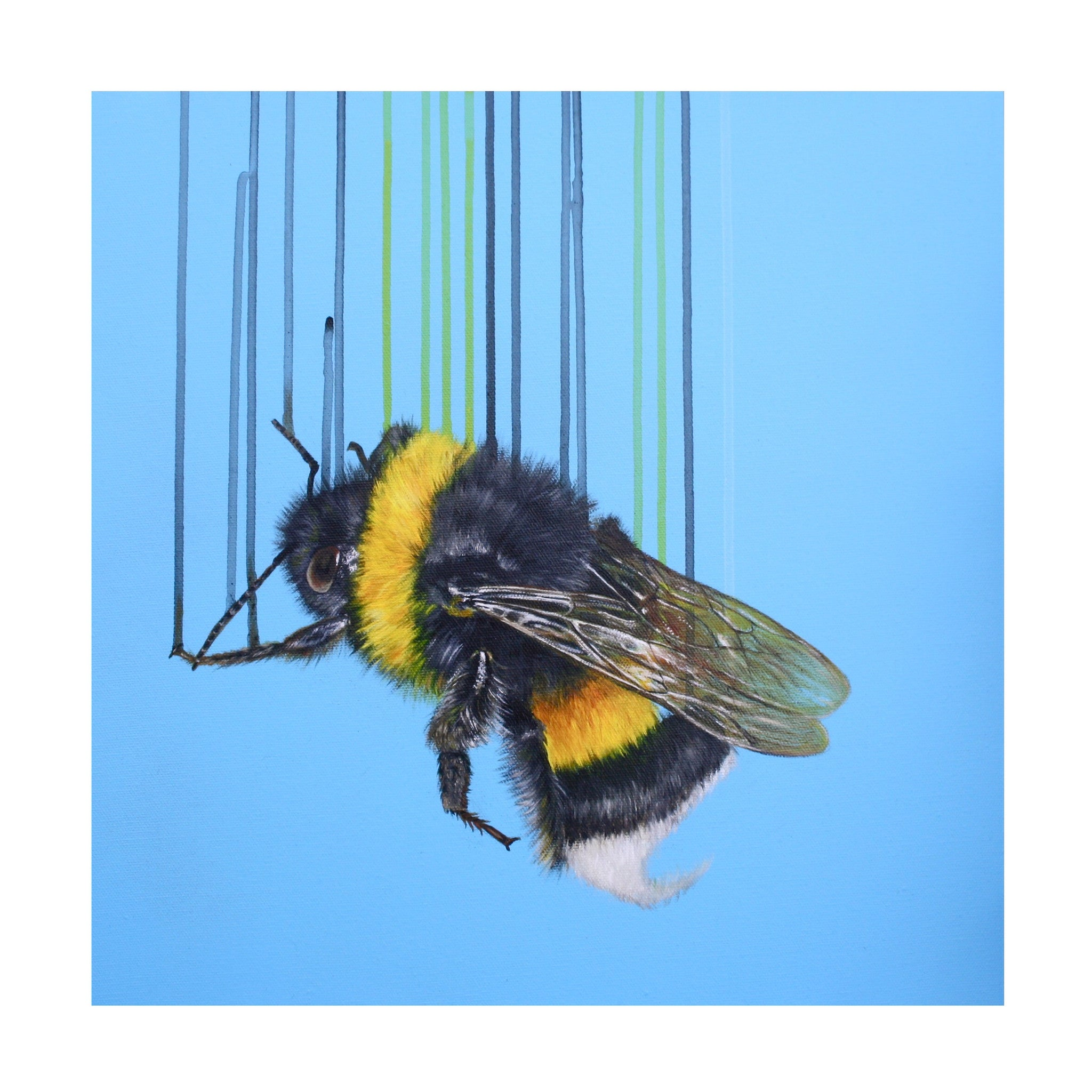 Bombus Terrestris - Louise McNaught