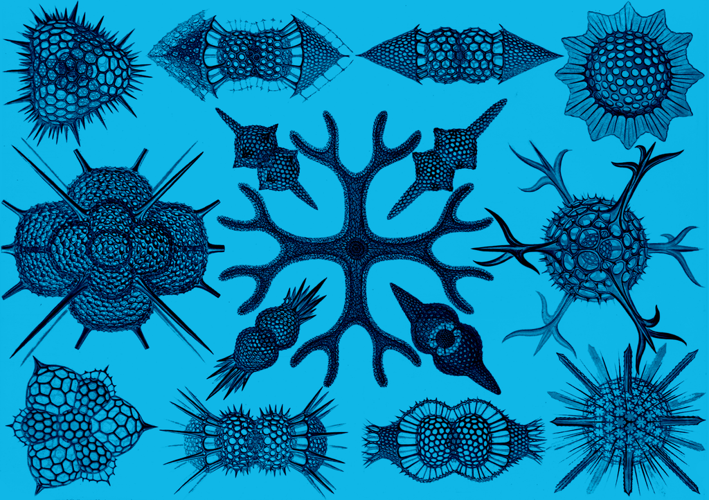 Behold, Haeckel Spumellaria, the ultimate inspiration for Arbor's unique pattern.