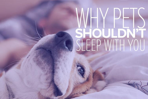 Should I Let My Pet Sleep With Me?