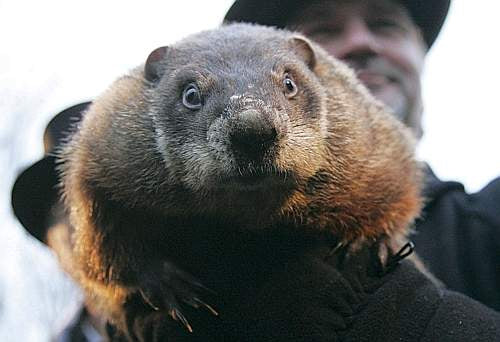 Punxsutawney Phil, the chilly groundhog