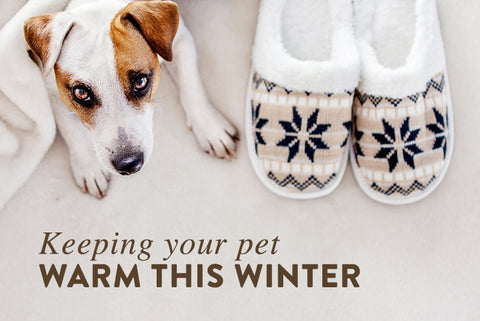 Keeping Your Pet Warm This Winter