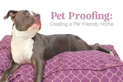 Pet Proofing: Creating a Pet Friendly Home