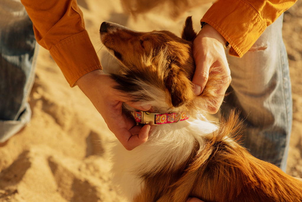 How to Choose the Best Collar For Your Dog